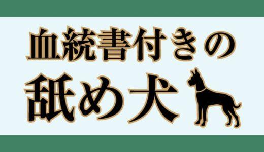 血統書付きの舐め犬(2020年10月)
